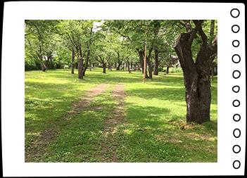桜野公園風景